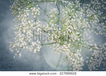 Glass Vase Of Fresh Dainty Small White Babies Breath Flowers Viewed From Above With A Heavy Vignette