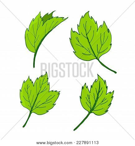 Set Of Elements For Decor Leaves. Vector