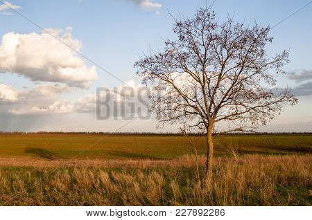Lonely Tree In The Desert Against The Sky. Endless Steppe Landscape On A Clear Spring Evening.