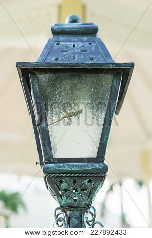 The Small Brown Lizard Is Sitting Into The Streetlight. Vintage Streetlight In The Daylight. The Sma