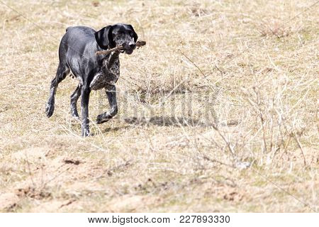 Dog Playing With A Stick On Nature .