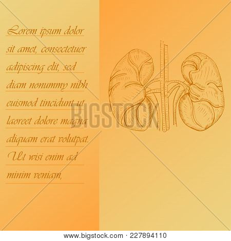Two Section Poster About Human Heart With Place For Text. Hand Drawn Human Heart. Human Anantomy Vec