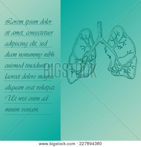 Two Section Poster About Human Lungs With Place For Text. Hand Drawn Human Brain. Human Anantomy Vec