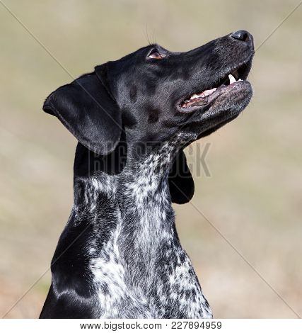 Portrait Of A Black Dog In The Nature .