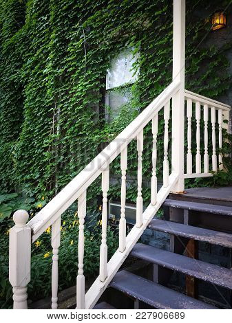 Entrance Of An Old House Covered With Green Ivy. Wooden Staircase With White Rail.