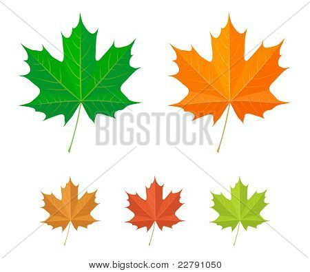 Maple leaves - vector icons
