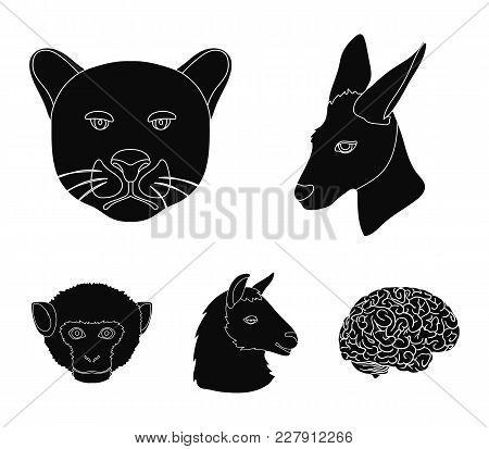 Kangaroos, Llama, Monkey, Panther, Realistic Animals Set Collection Icons In Black Style Vector Symb