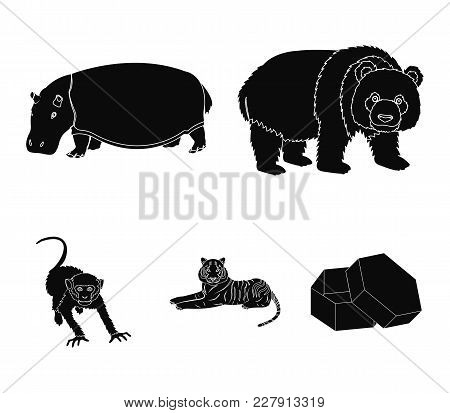 Bamboo Bear, Hippopotamus, Wild Animal Tiger, Monkey . Wild Animal Set Collection Icons In Black Sty