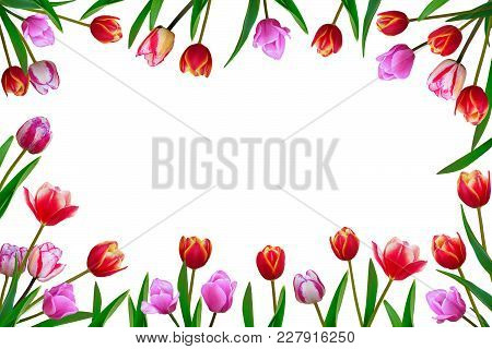 Bouquet Of Spring Fresh Flowers, Tulips With Multi-colored Petals. Isolated, White Background.