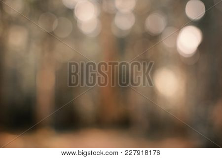 Beautiful Tree Bokeh Sunset Background For Texture