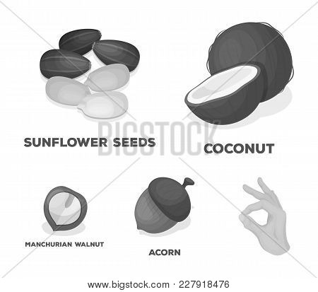 Coconut, Acorn, Sunflower Seeds, Manchueian Walnut.different Kinds Of Nuts Set Collection Icons In M