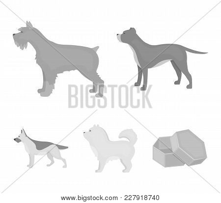 Pit Bull, German Shepherd, Chow Chow, Schnauzer. Dog Breeds Set Collection Icons In Monochrome Style
