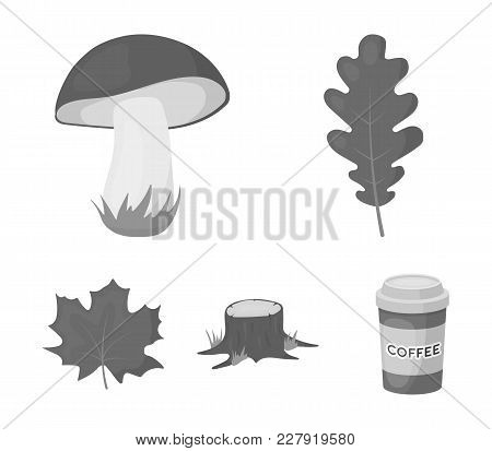 Oak Leaf, Mushroom, Stump, Maple Leaf.forest Set Collection Icons In Monochrome Style Vector Symbol