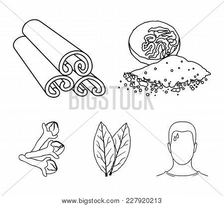 Nutmeg, Cinnamon, Bay Leaves, Cloves.herbs And Spices Set Collection Icons In Outline Style Vector S