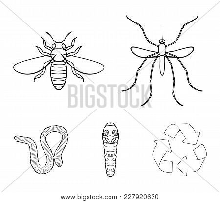 Worm, Centipede, Wasp, Bee, Hornet .insects Set Collection Icons In Outline Style Vector Symbol Stoc
