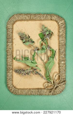 Herbarium. Sage, Salvia. Dry Plants In Framework Made Of Jute Thread. Scrapbooking.