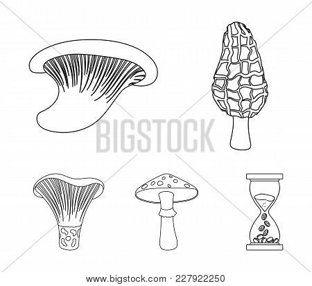 Morel, Oyster, Green Amanita, Actariu , Indigo. Set Collection Icons In Outline Style Vector Symbol