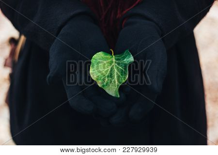 The Bright Green Leaf From The Tree Lies In Black Gloves