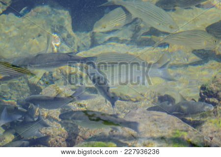 Photo Picture Image Of Many Fishes Pisces In The Water