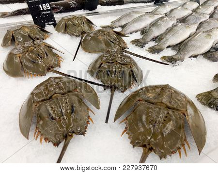 Horseshoe Crab For Sell On Ice At The Market