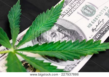Concept Of Sheet Of Marijuana Money, Close Up Of Cannabis Drugs, Medicine, Business, Breaking Law