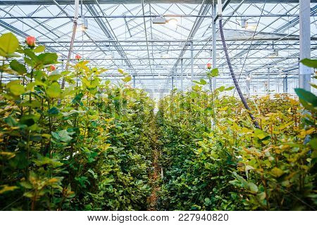 Interior Of A Greenhouse For Growing Flowers And Plants