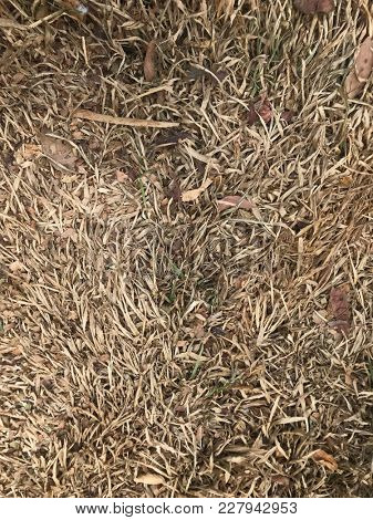 A patch of very dry brown grass.