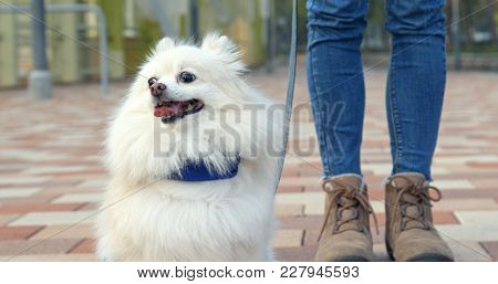 Woman going out with pomeranian dog