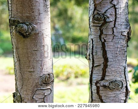 The nature tree trunk.
