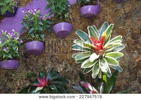 A Multi-colored Leaved Plant Stands Out On A Wall Garden