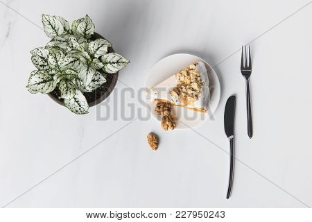 Top View Of Cake On Plate With Cutlery And Potted Plant On Grey