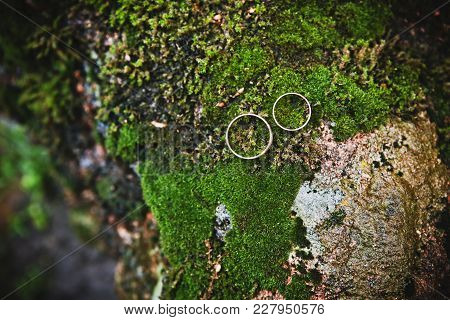 Beautiful Gold Rings Lie  The Moss