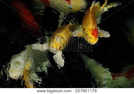 Koi Carp Goldfish Aquatic Reptile. Horizontal Color Image