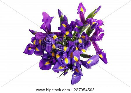 Bouquet Of Irises Tied. A Holiday, A Gift For A Woman. Smart. View From Above. Isolated.