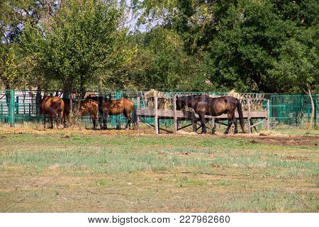 Horses In A Paddock On A Farmyard