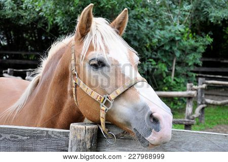 A Horse With A White Mane Is Standing In The Paddock