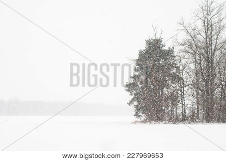 Heavy Snowfall On The Background Of Trees. Minimalistic Winter. Low Visibility In The Winter.