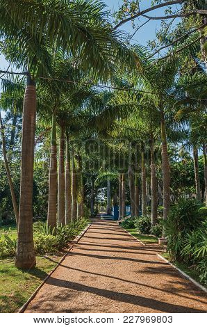 Pathway With Cobblestone Amidst A Lush Garden Full Of Tall Trees And Palm Trees, In A Sunny Day At S
