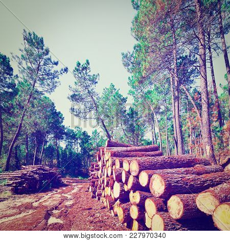 Logging In The Forest, Portugal, Instagram Effect