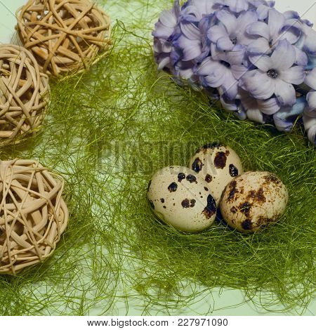 Easter Eggs In Nest  With Flower Of Hyacinthlaying On Green Background