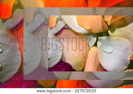 Photo Collage Of Leaves Of Roses With Water And Sunshine Colorful In Orange, White And Pink