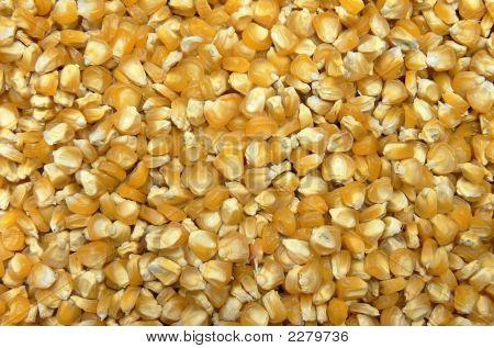 Corn Seeds Background