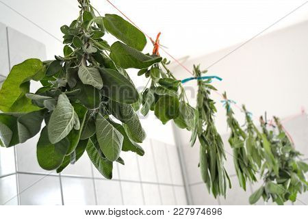 Sage Is Hung Up To Dry In A Room