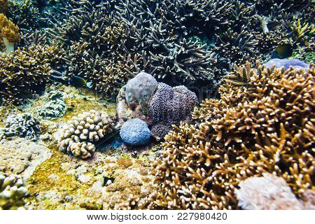 Tropical Corals In Indian Ocean. Scar Reef At Bali