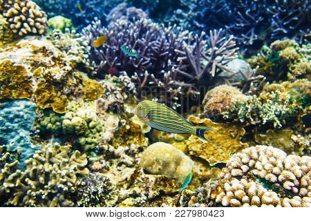 Tropical Corals And Bright Fish On Reef In Indian Ocean.