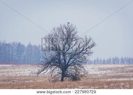 Winter Scenery In Podlasie Region Of Eastern Poland