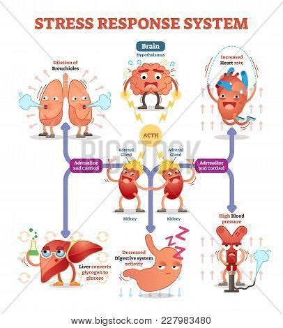 Stress Response System Vector Illustration Diagram, Nerve Impulses Scheme. Educational Medical Infor
