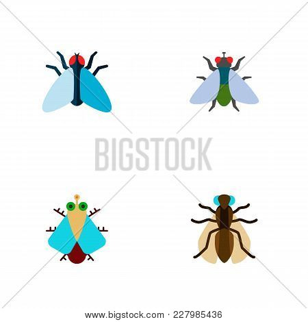 Icon Flat Fly Set Of Buzz, Gnat, Housefly And Other Vector Objects. Also Includes Fly, Tiny, Housefl