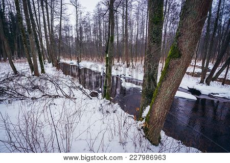 Winter View Of Small River Lutownia In So Called Old Bialowieza Forest Range, Part Of Bialowieza For