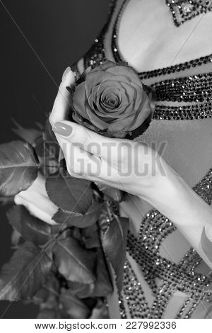Valentines Day, Birthday, Holiday Celebration. Rose Flower In Female Hand In Dress On Dark Backgroun